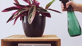 Indoor plant gif