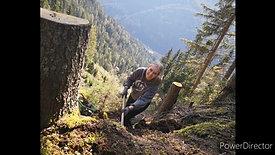 150 Bäume: Tag der Herausforderung