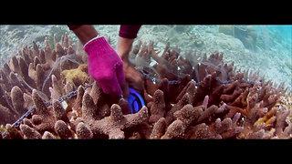 Reef to Aquarium - The Collector