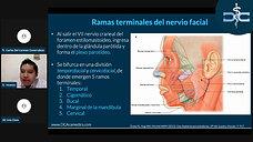 Anatomía del Nervio Facial y Bases Anatómicas de la Parálisis Facial