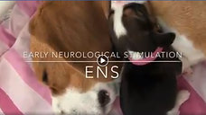 Early Neurological Stimulation (ENS)
