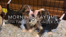 Puppies learn to play with Twitch the Cat