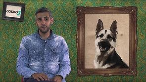 Der deutsche Schäferhund (WDR)