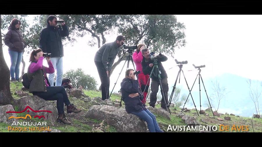 Vídeos Andújar