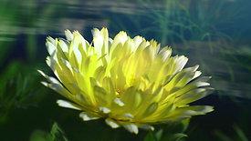 8_Ziedu harmonija
