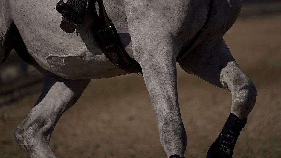 Evergreen Classic Horse Show