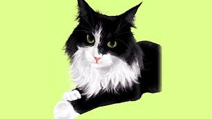 Pet of Art - Digital Pet Portrait Showreel - Converted