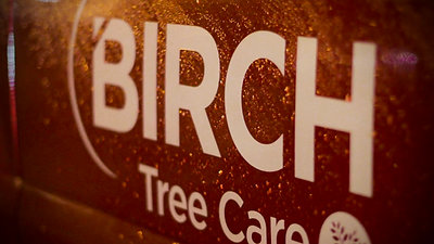 Birch Tree Care