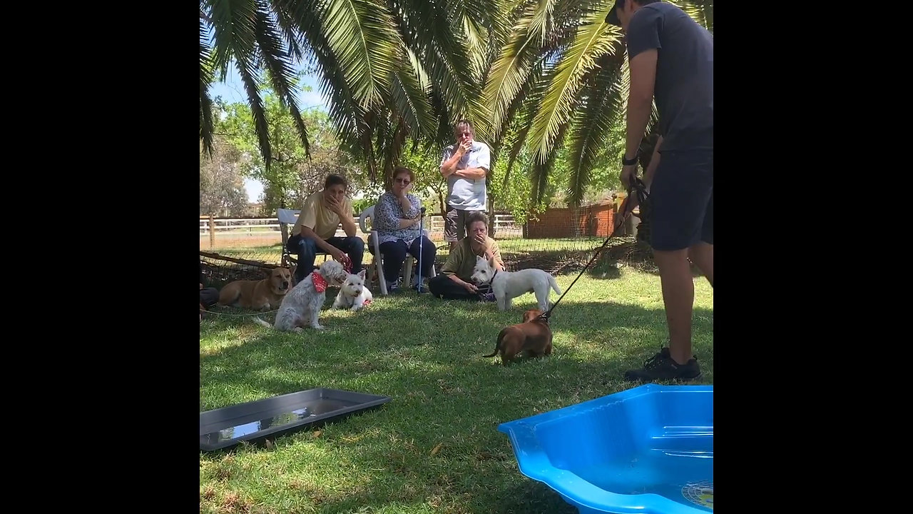 James Fruze helps dachshund overcome fear of water in less than 6 mins