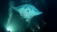 Manta Dive Highlights