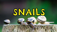 Snails, Trails, Feelers & Feet