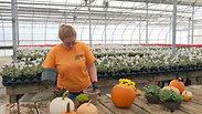 Create a Fall Pumpkin Planter