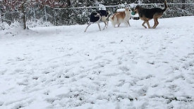 Thyme & Teona snow time