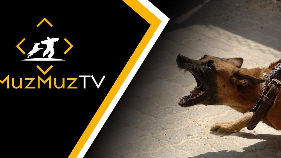 MuzMuzTV Event Streams