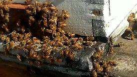 Ruche en bois essaim abeilles