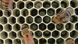 Cadres plastiques Anel abeilles
