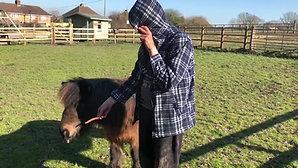 Feeding the Shetland pony