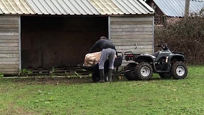 Using quad bike to move shavings
