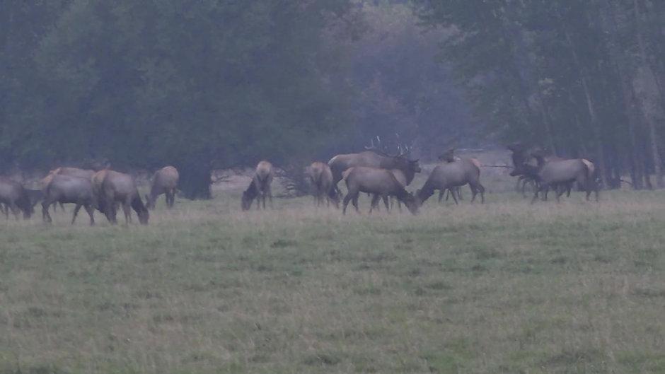 Coltons Elk Hunt 2020
