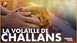 La volaille de Challans avec Vendée Qualité