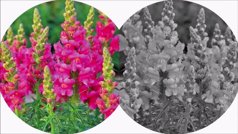 Flores Colombianas para El Mundo