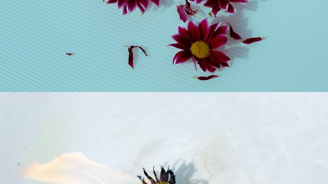 My Vase Flowers, Part 1