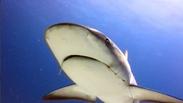 PLANET SEA - Documentary Series Teaser