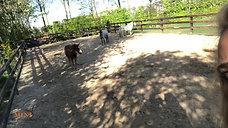 Paardencoaching Challenge - 'In de spiegel kijken' - HD 720p