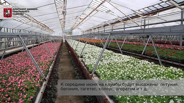 Москва будет цвести всё лето.