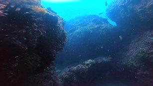 落日亭外海美麗的海扇珊瑚
