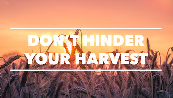 Don't Hinder Your Harvest