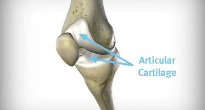 Knee-Joint-Animation
