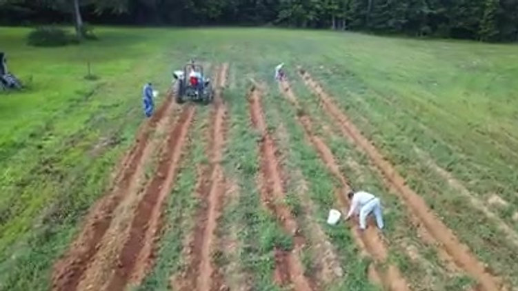 Tater Harvest 2018