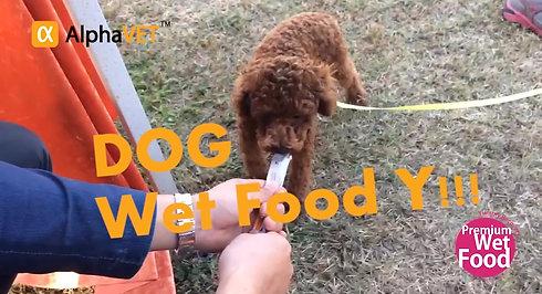 Wet Food Y