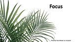 Focus (4/5/20)