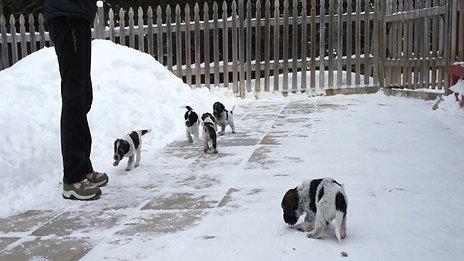 Découvrir la neige
