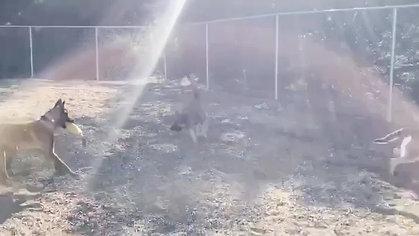 Dog Park Training