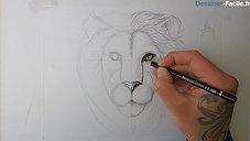 Lion de face