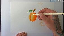 Abricot en détail !
