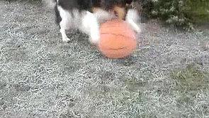 Fluffy spielt Ball