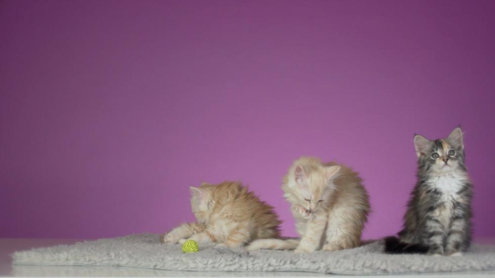 iZettle - Meow