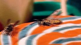 Wespen vertont