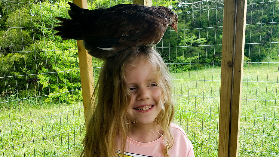 A Girl And Her Chicks