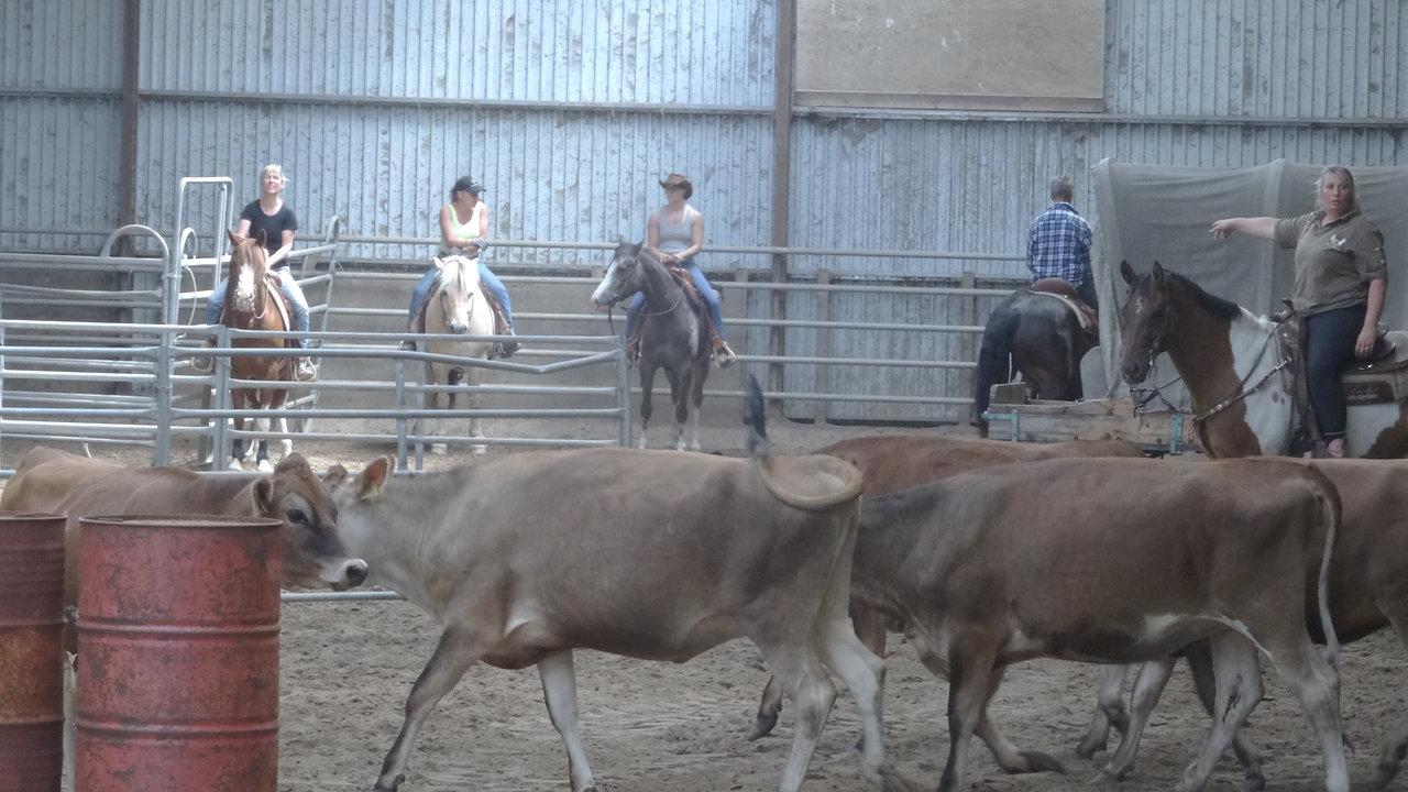 Kvæg Træning