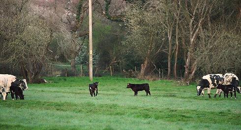 Farm - Sumners Ponds