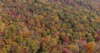 fall color has erupted at cunningham falls state park Maryland State Parks