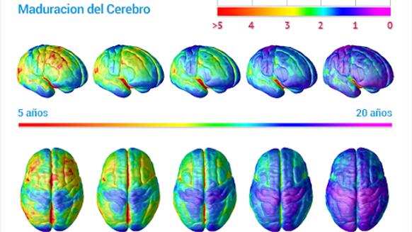 Mapeo Cerebral en Neura Institute