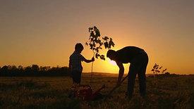 Pourquoi RGP Investissements plante des arbres