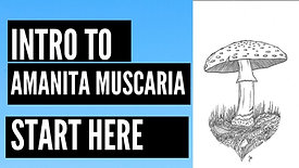What Is Amanita Muscaria?