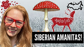 The Importance of Siberian Amanitas